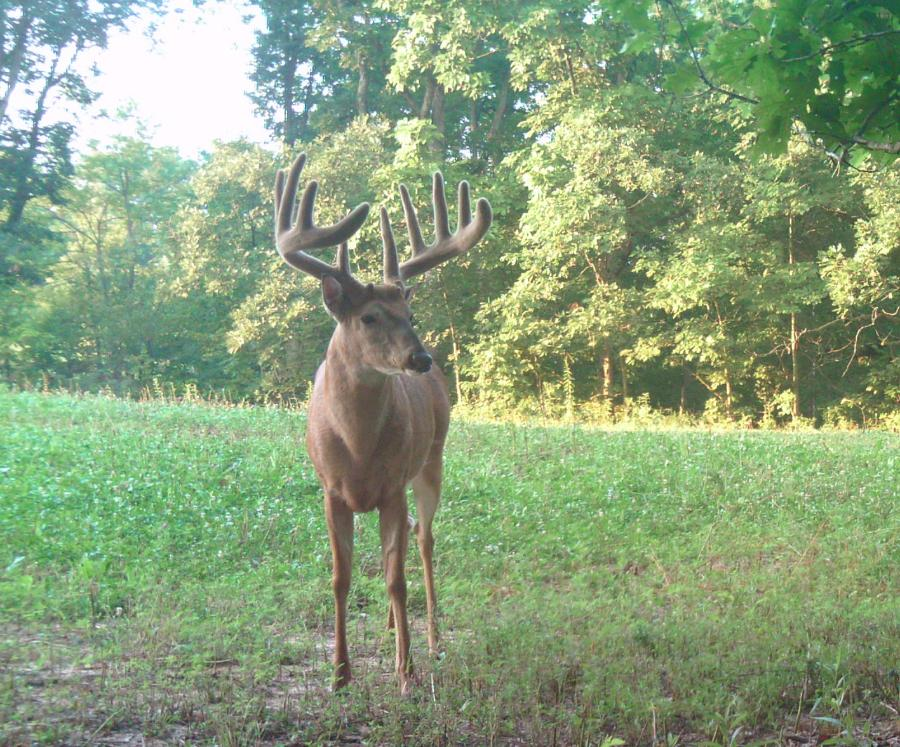 Spoon River Area Whitetail Outfitter