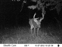 Spoon River Whitetail Bucks