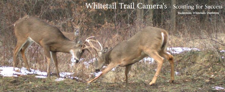 Trail Camera Scouting Methods for Mature Bucks